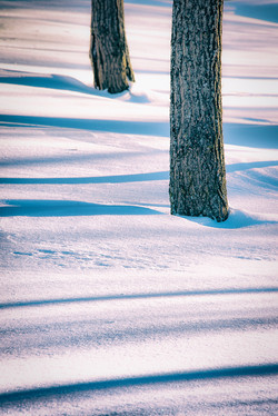 Barriefield Double Tree Shadow