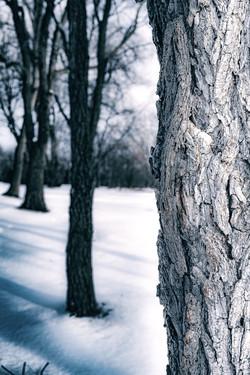 Depth of Trees