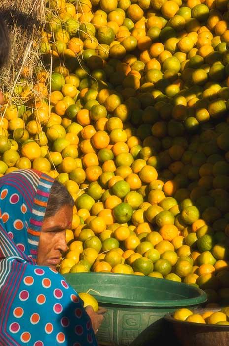 Udaipur Yellow Green