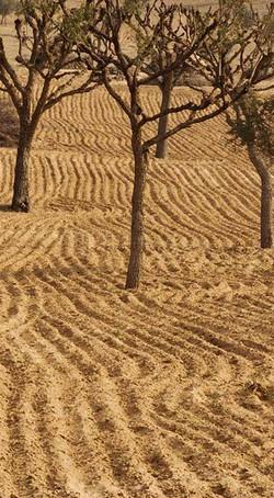 Amber Bikaner Furrowed Field
