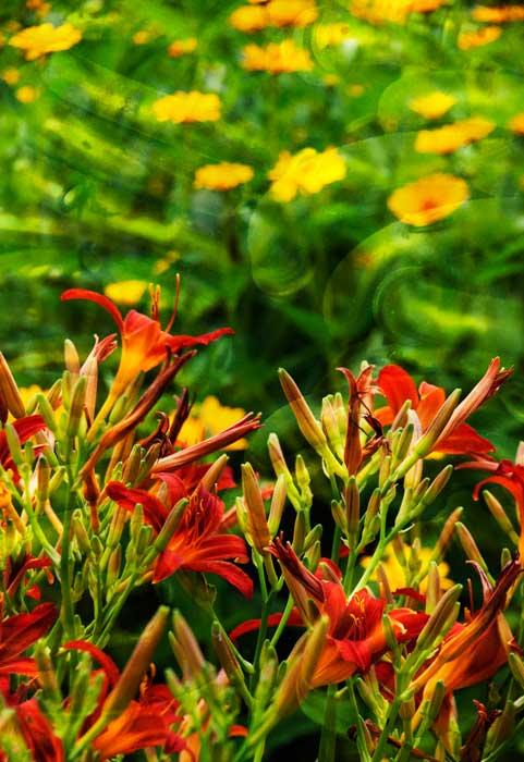 Balleycanoe Flowers and Rings