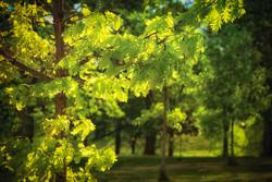 Penrose Trees