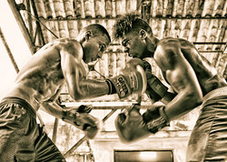 Boxers Boxing