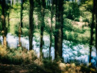 PHOTOART Nature Workshop