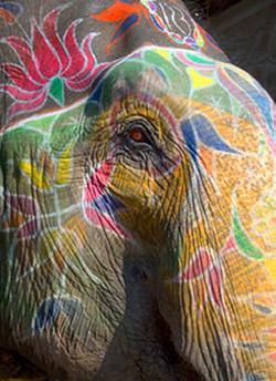 Amber Painted Elephant