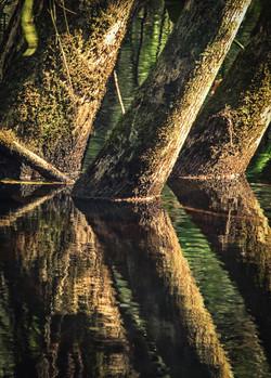 Swamp Trunks
