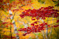 Red on Yellow Chippewa Falls