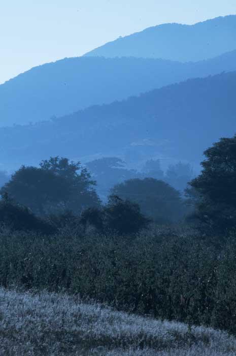 Blue Hills and Grass