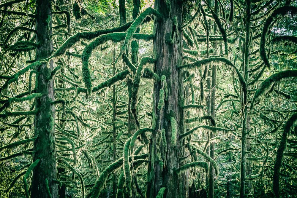 Tree Mosaic Bridal Veil Falls BC