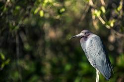 Relaxed Bird