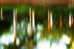 Palm Reflections