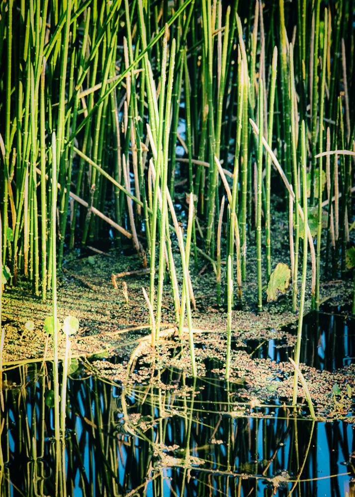 Weed Sticks