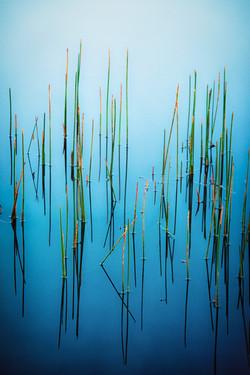 Vertical Weeds