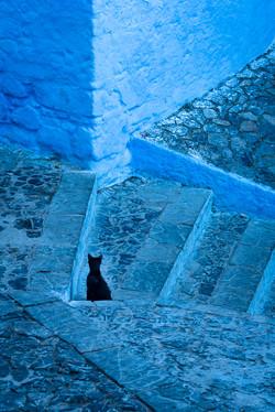Chefchaouen Black Cat