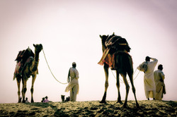 Jaisalmer Two Camels