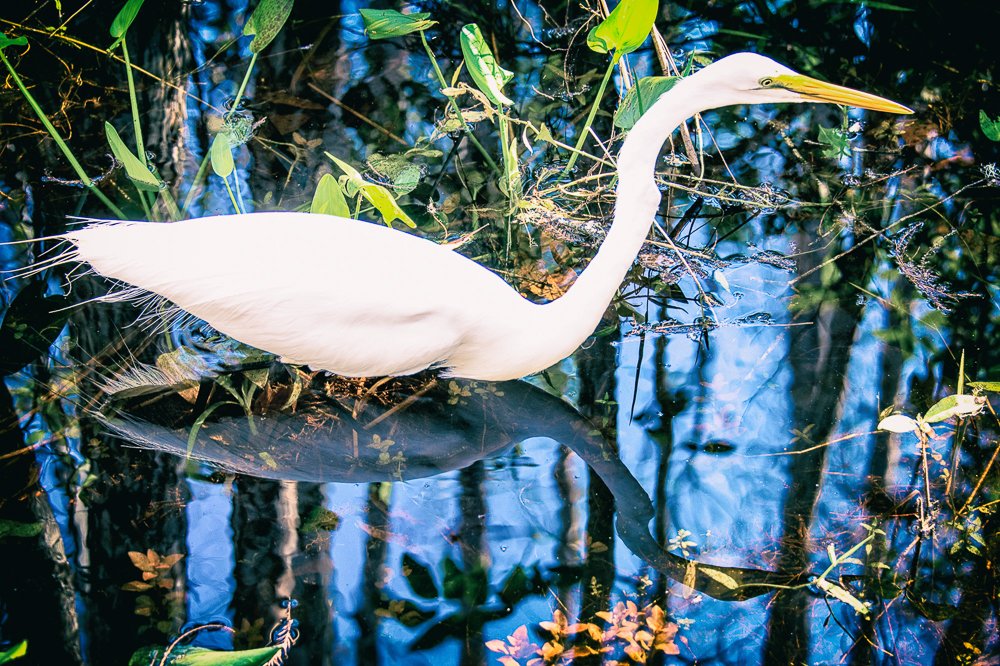 Mirror Bird