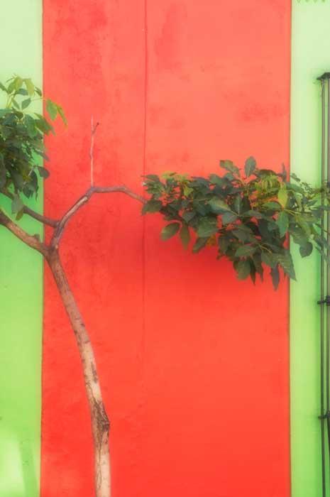 Tree Red Split