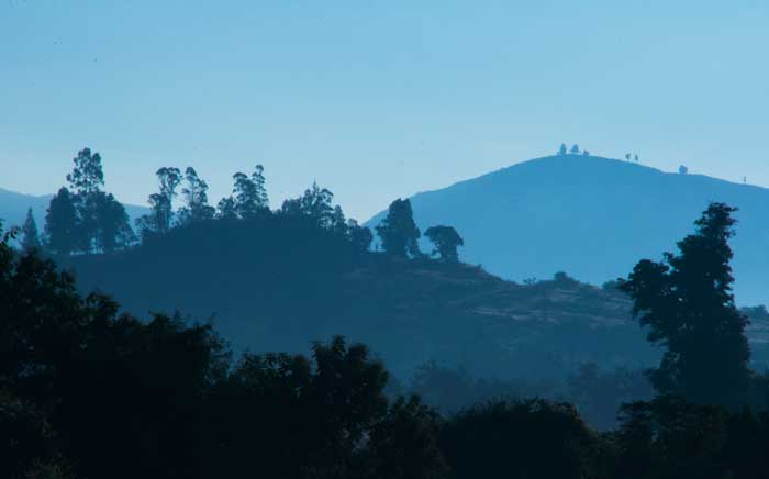 Blue Hills and Trees