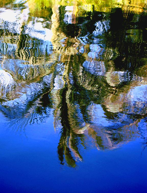 Blue Tree Reflection