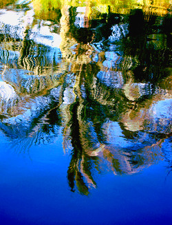 Blue Tree Reflection