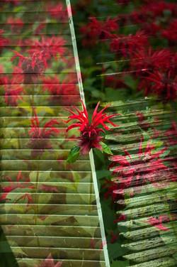 Balleycanoe Flowers on Shutters