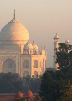 Taj Mahal Trees at Sunrise