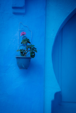 Chefchaouen Wall Plant