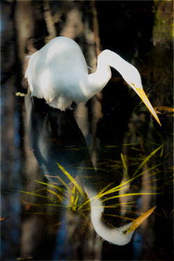 Emerging Bird
