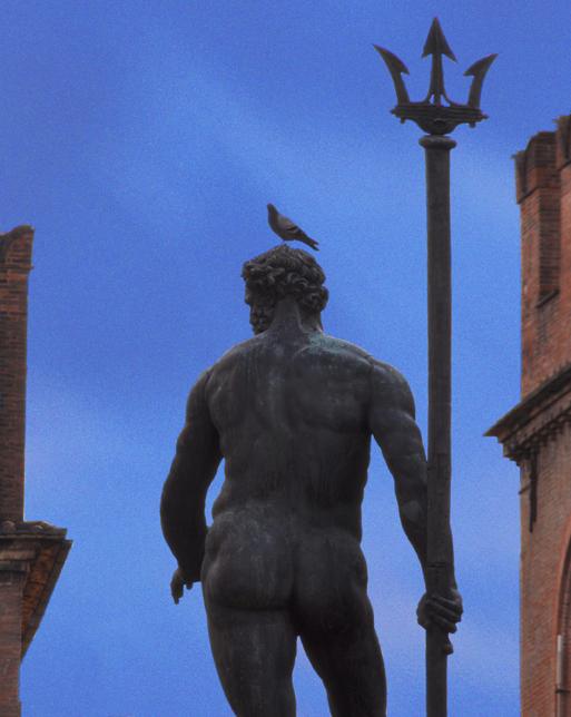 Bird on Head