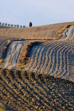Striped Hill San Quirico