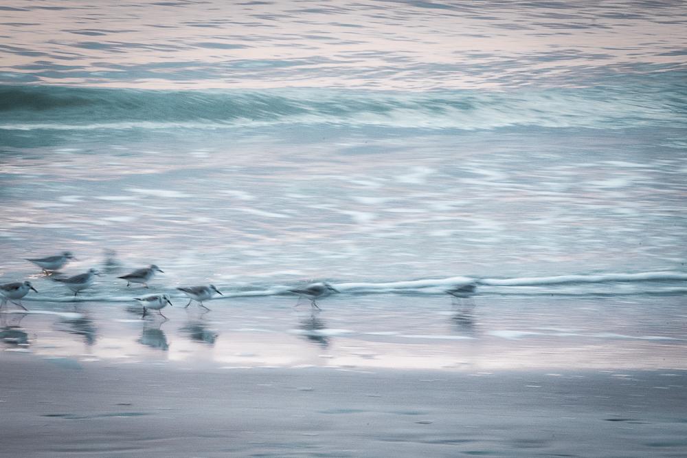 Bird Blur