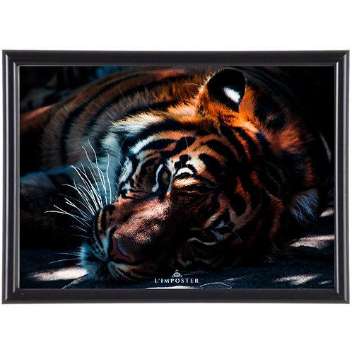 Affiche illustration Tigre