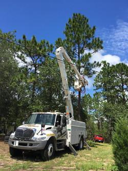 tree trimming around power line