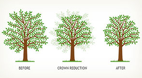crown reducton