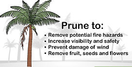 Why do you need to prune trees