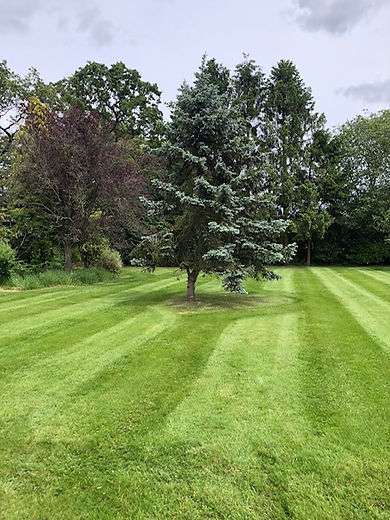 Finished lawn with trimmed tree.jfif
