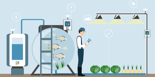 aquaponics schema.jpg