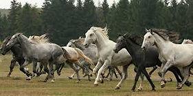 paarden-szilvas.jpg