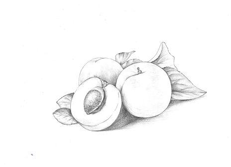 apricot 1_edited.jpg