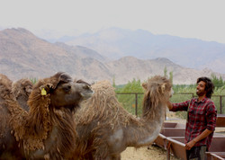 Camel Sanctuary 2
