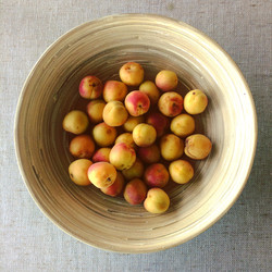 Ladakhi Apricots