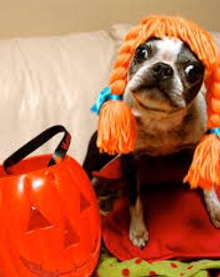 Halloween Dog.jpg