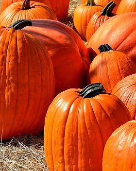 Holidays_pumpkin.jpg