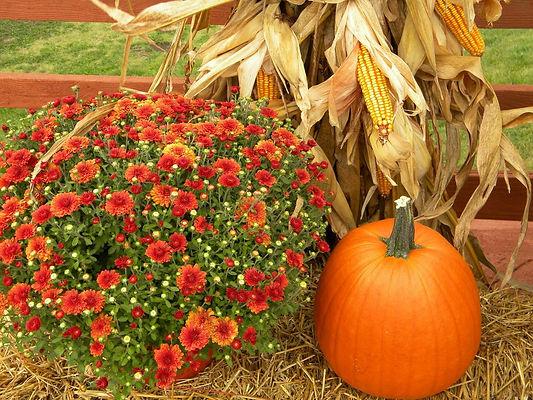 thanksgiving_pumpkin_harvest_orange.jpg