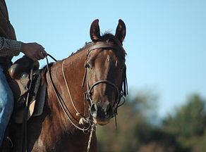 horse_bridle_horse_riding.jpg
