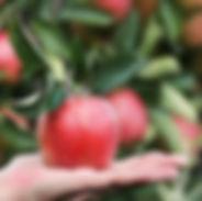 food, apple