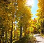 yellow trees, Fall, autumn, path