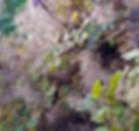 tree, frosty, leaves