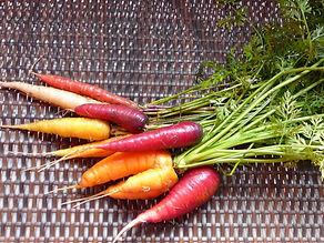 Food_carrots.jpg