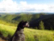 Idaho wilderness, dog, Packer